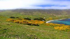 Settlement, Carcass Island, West Falkland