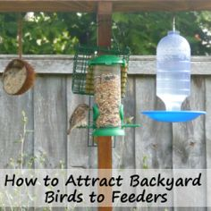 how to attract birds to your backyard garden feeders or to your bird