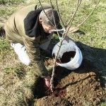 Planting Fruit Trees - Growing with Stark Bro's
