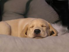 Et ce chiot qui fait la sieste.   Les 30 animaux les plus mignons de la semaine