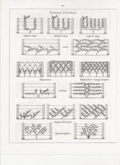 espalier patterns. maybe with crab apples?