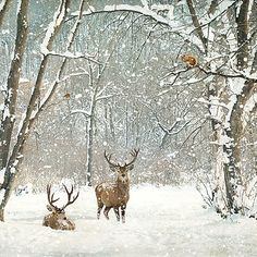 Deer Woods - christmas card design by Jane Crowther for Bug Art greeting cards.