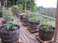 Container gardening ideas that don't involve the dreaded terracotta pots - wine barrels on wheels