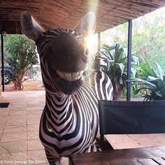 """WEBSTA @ livingonearth - Woke up like this! 😁 