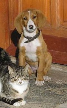 Cats & Dogs: 9 simple steps for introducing your cat to your new puppy