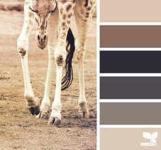 giraffe tones