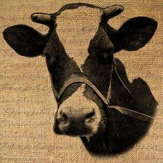 We're all quite mad here, you'll fit right in Collage Sheet, Collage Art, Cow Head, Cow Art, Burlap Fabric, Feed Sacks, Barn Quilts, Digital Collage, Farm Animals