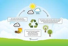 Biomass: A Renewable Energy Source or a Danger to the Environment? Graphing Worksheets, Printable Worksheets, Renewable Sources Of Energy, Photosynthesis, Research Projects, Solar Energy, Second Grade, Environment, Activities