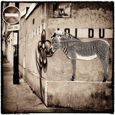 Sophie-Photographe-street-art-animaux-1