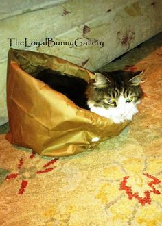 The Monkey Is in the Bag  Cat Kitten by TheLoyalBunnyGallery, $25.00