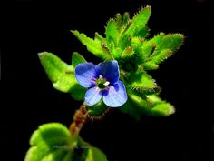 Tiny weed flower in my garden