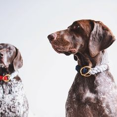 The Pointer brothers rocking their one of a kind lasso collars ;)