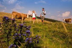 Eine #Wandertour zwischen den Tieren in der Almlandschaft, gefällig? Kommt doch in den Naturpark Almenland! #naturparkalmenland #almenland #sommeralm #teichalm Foto (c) Bergmann Animals, Pictures, Biking, Hiking, Landscape, Summer, Animales, Animaux, Animal
