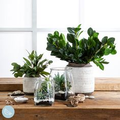 Finish your home styling with the addition of stunning artificial plants! #artificialflowers #fakeflowers #imitationflowers #flowers #diyhomedecor #homedecor #diy #homestyle #homestyling #artificialflowerarranging #artificialflowerarrangement #flowerdecor Artificial Flower Arrangements, Artificial Plants, Succulent Pots, Planting Succulents, Plastic Glass, Fake Flowers, Trees To Plant, Flower Decorations, House Plants