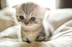 Baby cato ww its beatufull