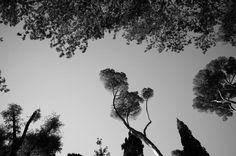 THE MOST BEAUTIFUL TREES IN THE VILLA FARNESE PARC, Rome  Photo Olivier Zahm