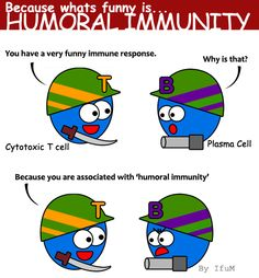 Microbiology Made Easy: HUMORAL IMMUNITY, its funny.