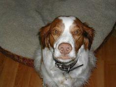 My best friend copper.