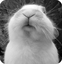 bunny nose...this is what Chester does when she wants me to rub her forehead
