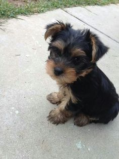 ohhh i will keep begging Tony until a little puppy like this ends up in our house :)