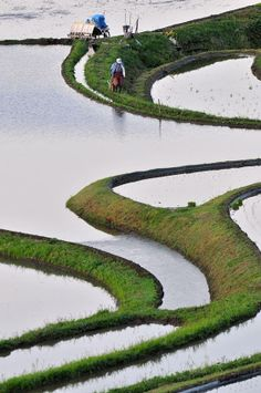 Terraced rice paddies in Hyogo, Japan