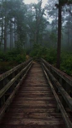 Fullerton Park Hiking Trail ~ Kisatchie National Forest, La.