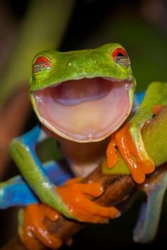 Pictures of the day: 7 May 2014 Today: A. - Pictures of the day: 7 May 2014 Today: A smiling tree frog, a tree climbing elephant and a firenado - Funny Bird, Funny Frogs, Cute Frogs, Animals And Pets, Baby Animals, Funny Animals, Cute Animals, Animal Memes, Wild Animals