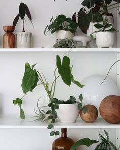 "549 gilla-markeringar, 3 kommentarer - Rena • Studio Hear Hear (@studiohearhear) på Instagram: ""I'll take any excuse to repost  @______thom 's plant filled shelves. So happy to be a part of his…"""