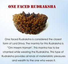 Interesting Facts of One Faced Rudraksha