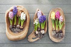 Die 86 Besten Bilder Von Zwiebelblumen In 2019 Beautiful Flowers