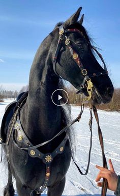 Funny Horses, Cute Horses, Beautiful Horses, Animals Beautiful, Largest Horse Breed, Horse Behavior, Pictures With Horses, Friesian Horse, Majestic Animals