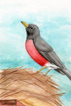 Robin Original Watercolor Painting OSWOA Bird by KetturahsArt, $30.00