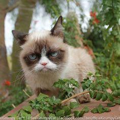 .Ah grumpy cat