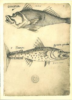 Fishes  Maranhao Natural History Art Print