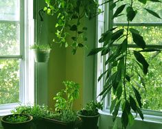 Las plantas de interior purifican el aire