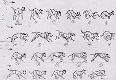 2D Traditional Animation — 101 Dalmatians - Marc Davis