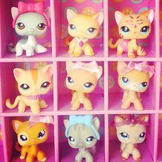 Littlest Pet Shop RARE Short Hair Cat Ranch 339 Glitter Moon VALENTINES DAY GIFT #Hasbro