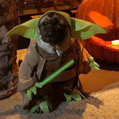Animals in Star Wars costumes