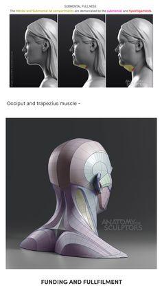 Head Anatomy, Human Body Anatomy, Anatomy Poses, Anatomy Study, Anatomy Drawing, Anatomy Art, Zbrush Anatomy, Figure Drawing Reference, Anatomy Reference