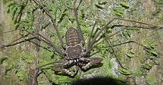 I still don't like the name 'Goliath Bird Eating Spider.'