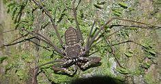 I still don't like the name 'Goliath Bird Eating Spider.'