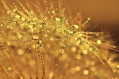 Golden balls by goodace on 500px