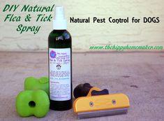 DIY Natural Flea & Tick Spray
