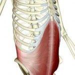 Transversus abdominus - tighten that lower natural corset