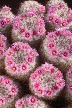 Cactus world beauty
