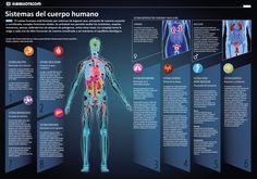 Sistemas del cuerpo humano - INVDES