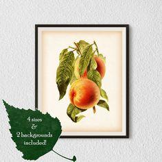 Fruit print, Botanical printable art, Kitchen wall prints, Fruit wall art, Antique print, Peach, Instant download print, Illustration, #23