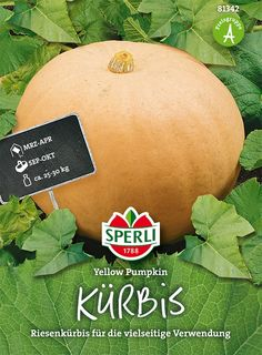 Kürbis Yellow Pumpkin