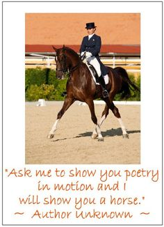 63 best equestrian images on pinterest beautiful horses horses equestrian ccuart Gallery