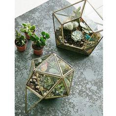 Click To shop ▶️ terrarium étoile #urbangrow https://shoppers.theshopally.com/sophie-etchart/20160914/click-to-shop-terrarium-etoile-urbangrow